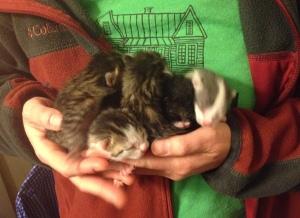 So much cuddly cuteness!